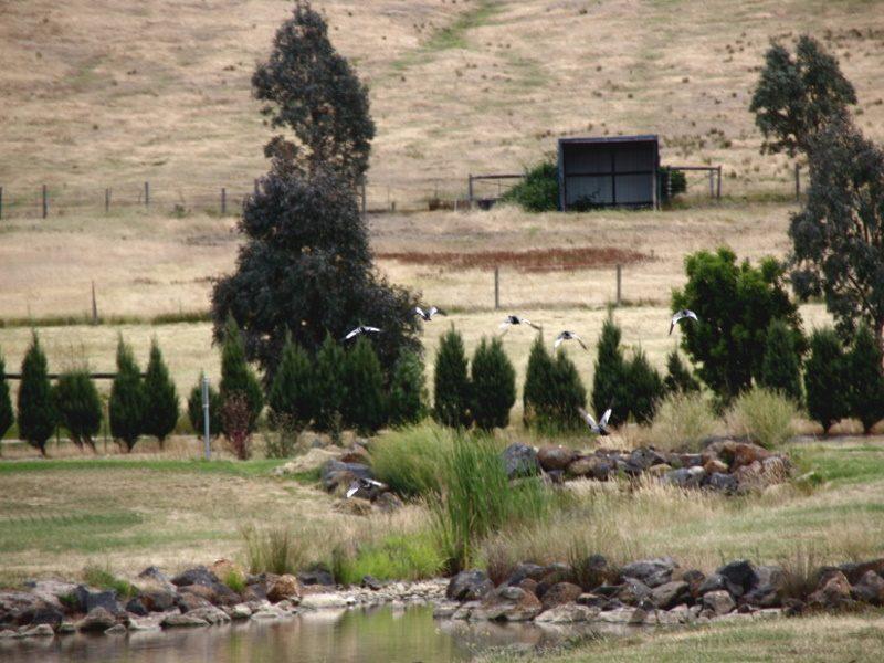 Yan Yean Cemetery Lake